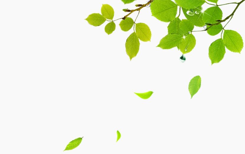 树叶 绿叶飘落 树枝 PPT装饰图